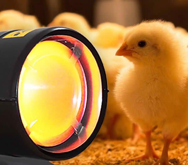 55KW烧柴油暖风机养鸡供暖设备